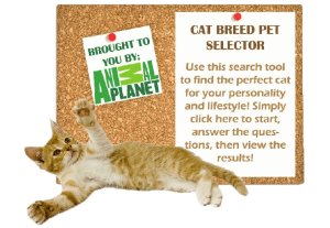 Cat Breed Selector 2
