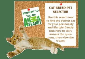 Cat Breed Selector 2