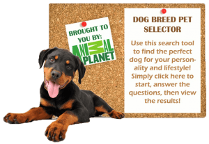 Dog Breed Selector 2