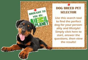 Dog Breed Selector 2