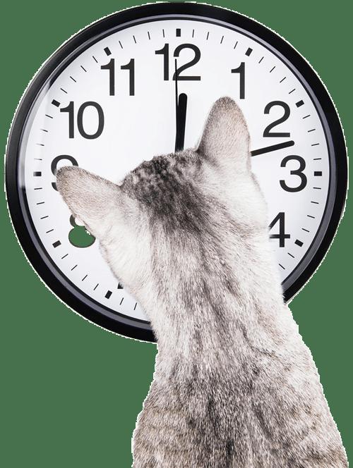 cat-clockext-2